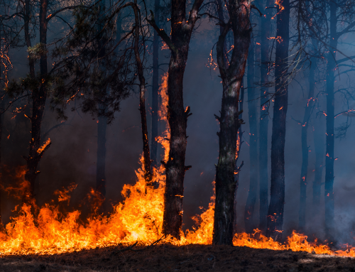 How to Stay Informed About Forest Fires